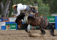 Saddlebronc
